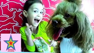 ЛАЙФХАК СУПЕР СВИТЕР ИЗ ШАПКИ ДЛЯ СОБАКИ ТЕРРИ LIFE HACKING SUPER SWEATER HAT FOR DOGS TERRY