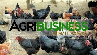Agribusiness Philippines