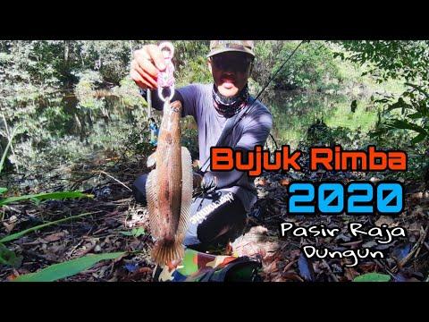 Casting Bujuk 2020 - Paya Hutan Sarang Bujuk