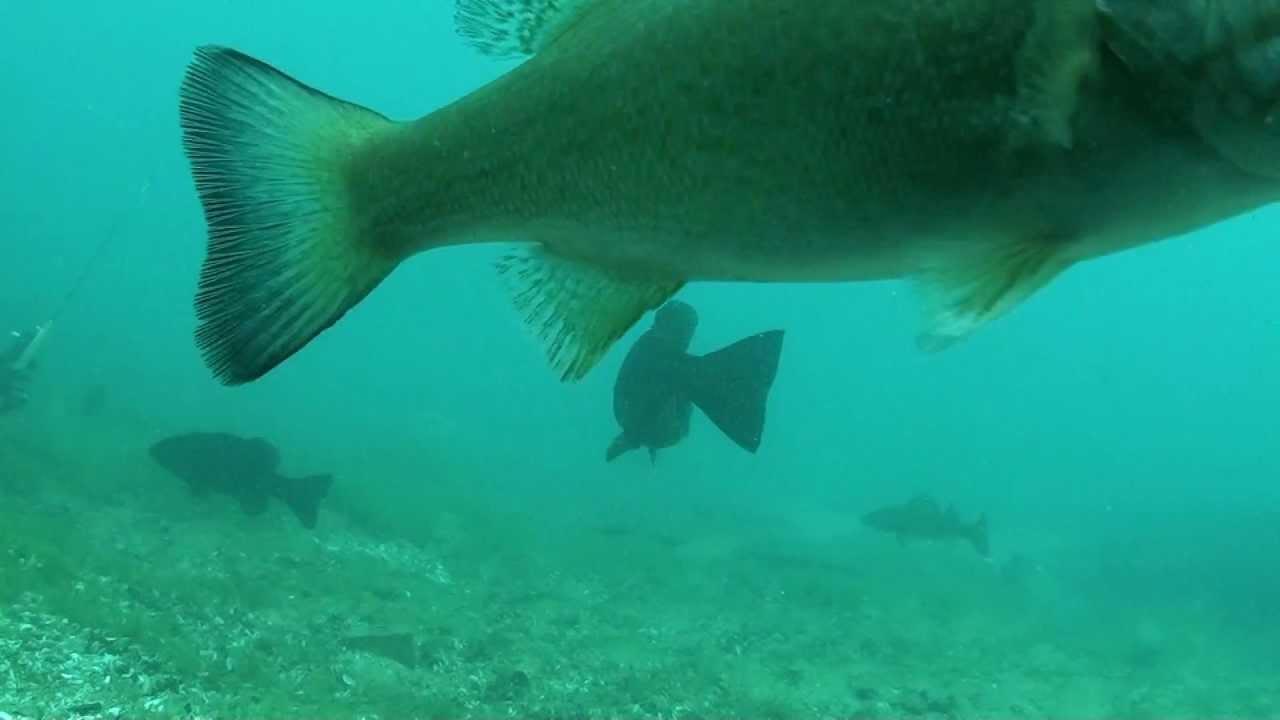 Underwater Fishing in Port Huron Michigan
