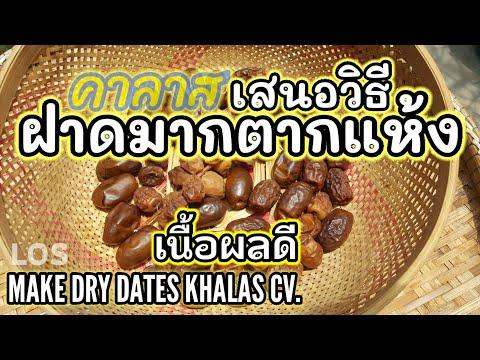 วิธี ทำอินทผาลัมตากแห้ง พันธุ์คาลาส  (นาทีที่5 ) make dry dates khalas CV.(ดูลิงค์ใต้คลิปด้วย)