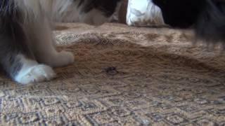 Кошка съела волосогрызгу