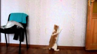 Кошка и лазер