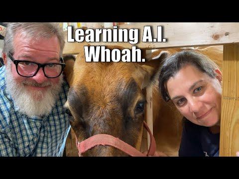 Learning A.I. Whoa.   A Big Family Homestead VLOG