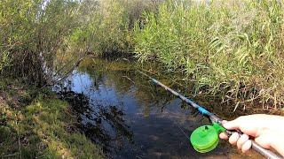 КИЛОГРАММОВЫЕ РЫБИНЫ В РУЧЬЕ! Микро реки. Разведка. Рыбалка.