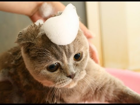 How To Sedate A Cat For Grooming - Cat Grooming Tips Beginners