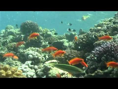 Amazing Scuba Diving Adventure