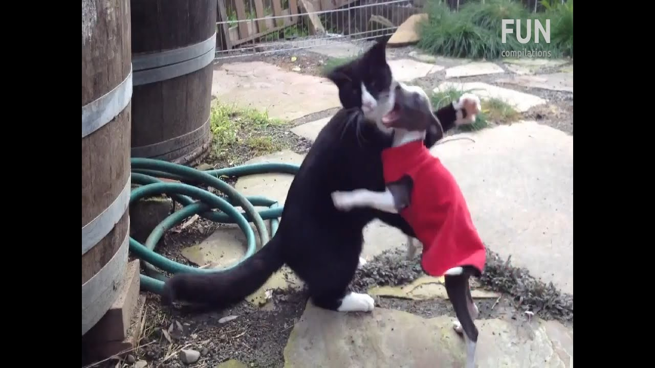 Funniest Cat Vs Dog Fighting Videos Youtube