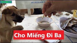 Đàn Chó Này Khoái Món Ốc Hấp Sả | Tính Mập Tv