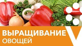 ВЫРАЩИВАНИЕ ОВОЩНЫХ КУЛЬТУР: ОТ А ДО Я! Борьба с вредителями и секреты выращивания овощей!!