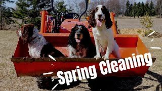 'Springer' Cleaning  The Behind the Scenes of Breeding English Springer Spaniels