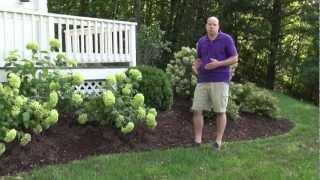 Front Yard Landscape Design Ideas - Trumbull CT Landscape Designer