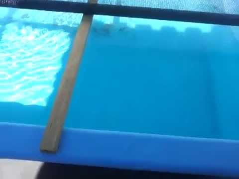 Previa De Criacao De Tilapias Em Piscina De Fibra Youtube