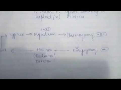CHAP 2-03 KINGDOM FUNGI CLASS11 BIOLOGY