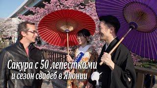 Сакура с 50 лепестками и сезон свадеб в Японии / Sakura in Japan 2019
