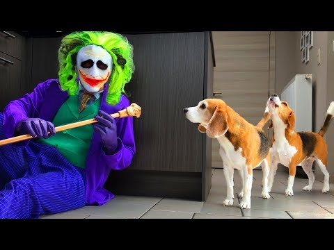 Dogs Vs Funny Clown Prank : Funny Dogs Louie and Marie