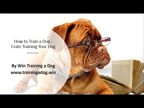 Dog Training: How to Train a Dog - Crate Training Your Dog