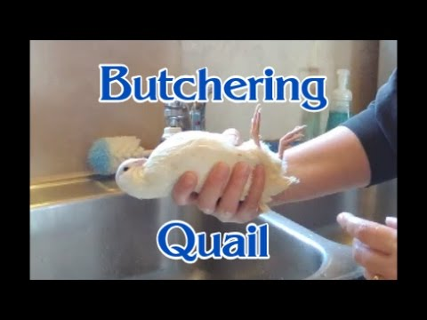 How To Butcher Quail