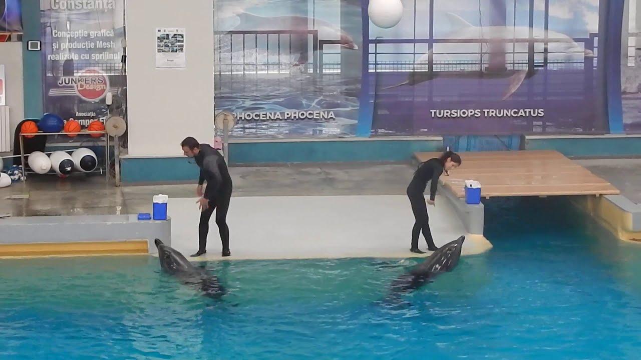 Delfinariu Constanta: spectacol de inteligenta intre delfini si oameni.
