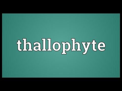 Header of thallophyte