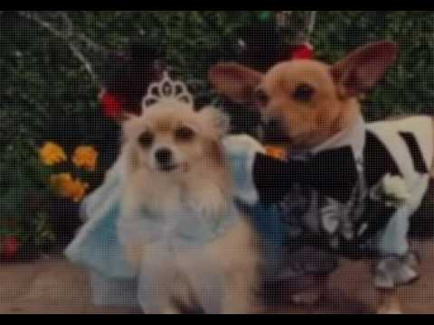 Beverly Hills Chihuahua 3 2012  Film Complet En Français streaming vf