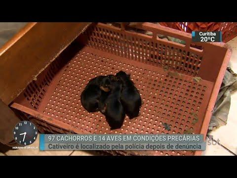 Polícia apreende 97 cachorros em casa da Zona Leste de São Paulo | SBT Brasil (28/03/18)