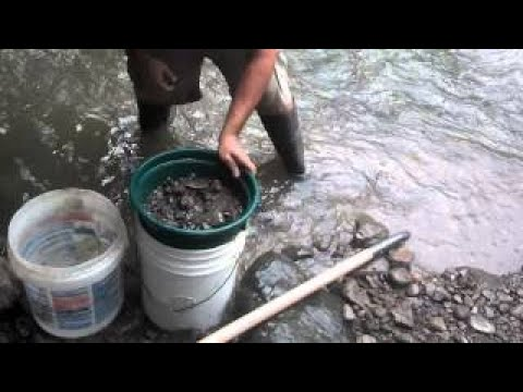 Kids and I gold hunting at Tuscarawas river S2:E4 by MrTim4gold