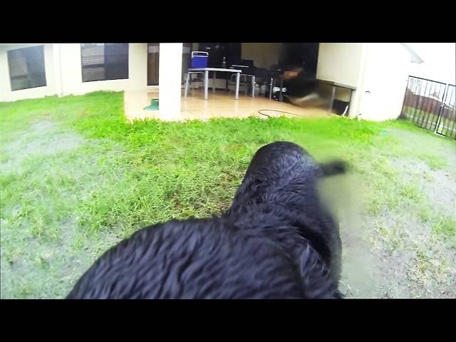 Wet Dog GoPro Fun!