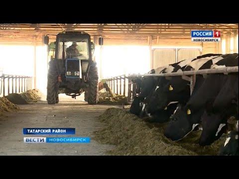 В Татарском районе возрождают одно из самых больших сельхозпредприятий