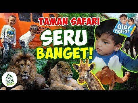 olaf-&-halfar---seru-banget-di-taman-safari-(olaf-hampir-digigit-rusa!!)