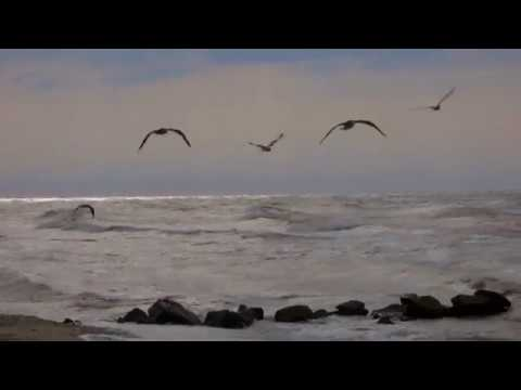 Blue Guitars of Picasso (Lonely Beach Cut) DJ Maretimo