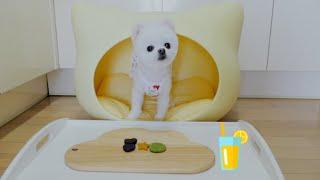 [POMI]강아지 수제쿠키_화이트 포메