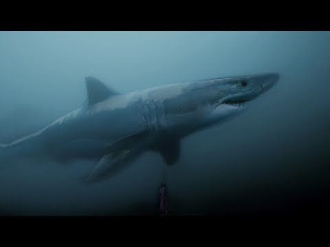 GoPro Awards: Great White Shark Encounter
