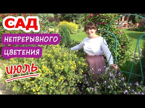 САД НЕПРЕРЫВНОГО ЦВЕТЕНИЯ. Цветущие многолетники в ИЮЛЕ. Обзор моего летнего сада!