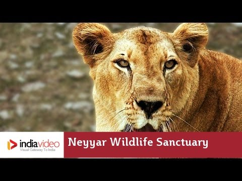 Lions and herbs - Getting wild at Neyyar Dam