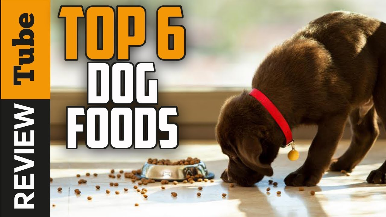 Dog Food Best Dog Food 2018 Buying Guide Youtube