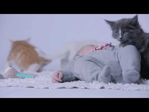 Kittens, Puppies & a Baby (Webvideo)