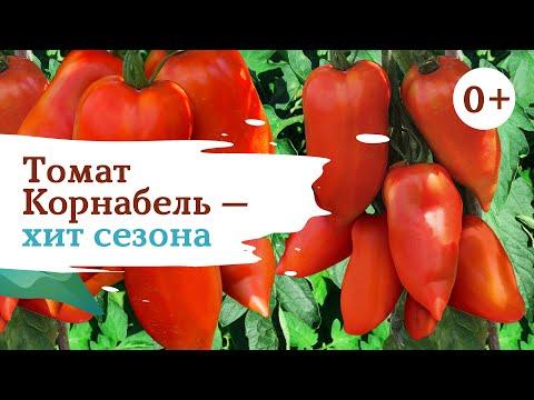 Томат Корнабель - мировой шедевр