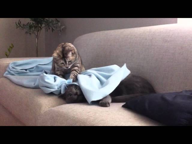 Funny cats play hide and seek