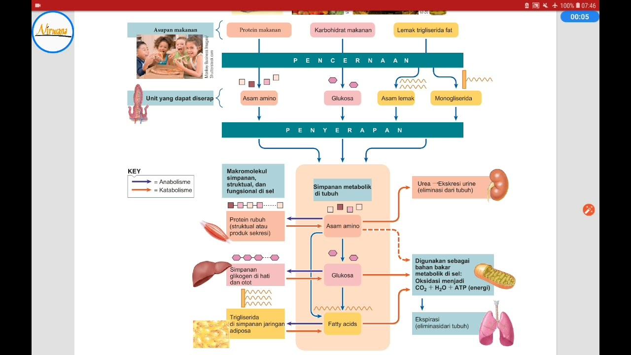 Cara Kerja Hormon Insulin dan Faktor yang Memengaruhi ...