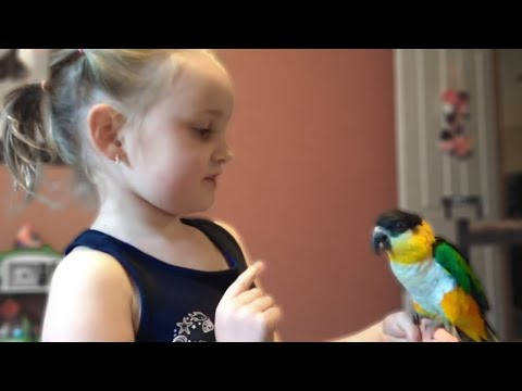 A Video Tribute to ChiChi The Caique Parrot