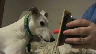 Service Dog In Training Learns To Flip A Light Switch On And Off