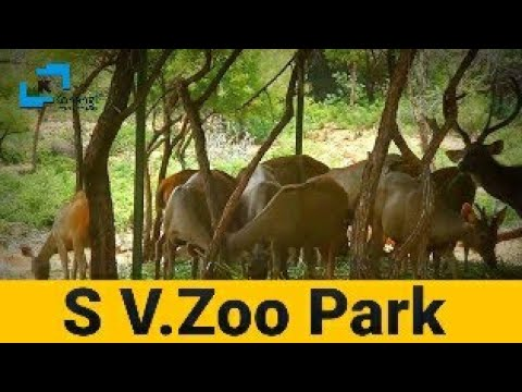 SV Zoo Park - Sri Venkateswara Zoological Park - Tirupati - A.P  - Places to Visit in Tirupathi