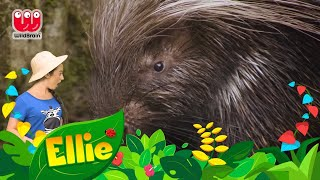 Ellie Explorer Goes To The WETLANDS | Educational Videos for Kids | #TodayILearned | Learning