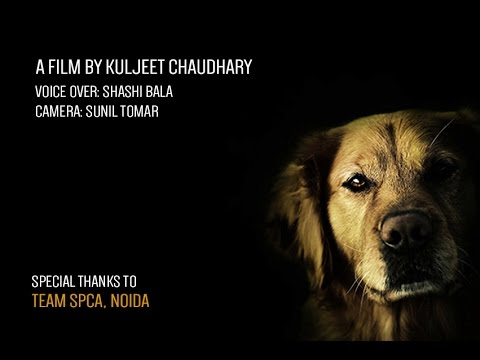A Voice for Voiceless - Stop Animal Cruelty