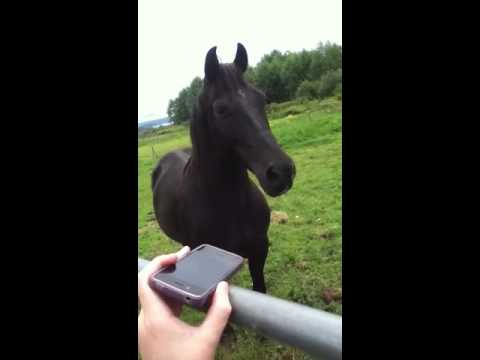 My horse Shaker listening to music