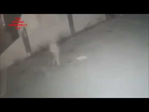 nouvel ordre mondial | Une étrange silhouette blanche filmée en pleine rue