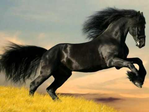 Top 10  poze cu cai