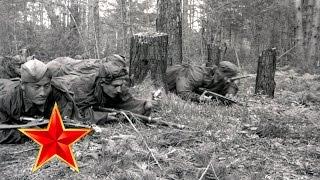 В лесу прифронтовом - Песни военных лет - Лучшие фото - С берез неслышен