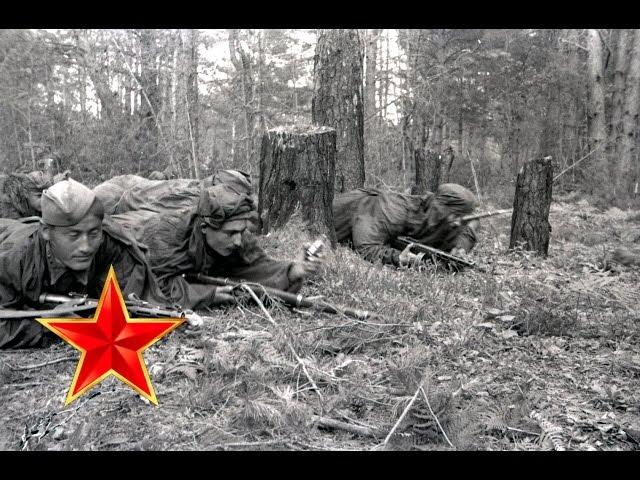 В лесу прифронтовом – Песни военных лет – Лучшие фото – С берез неслышен